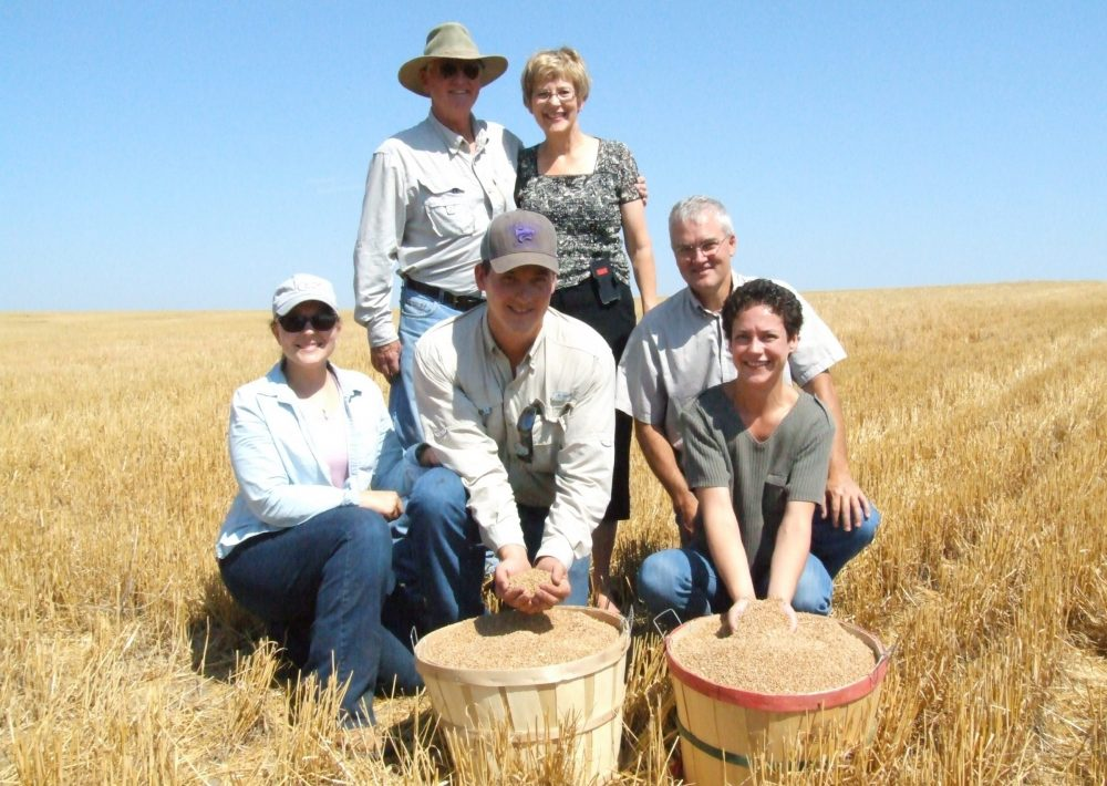 The 25-billionth bushel of wheat cut in the state of Kansas