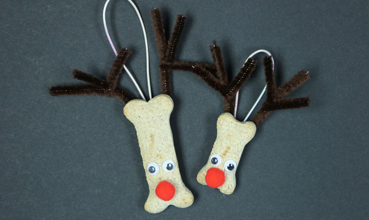 Make your own ornaments - DIY dog biscuit reindeer ornaments ready to hang on the Christmas Tree