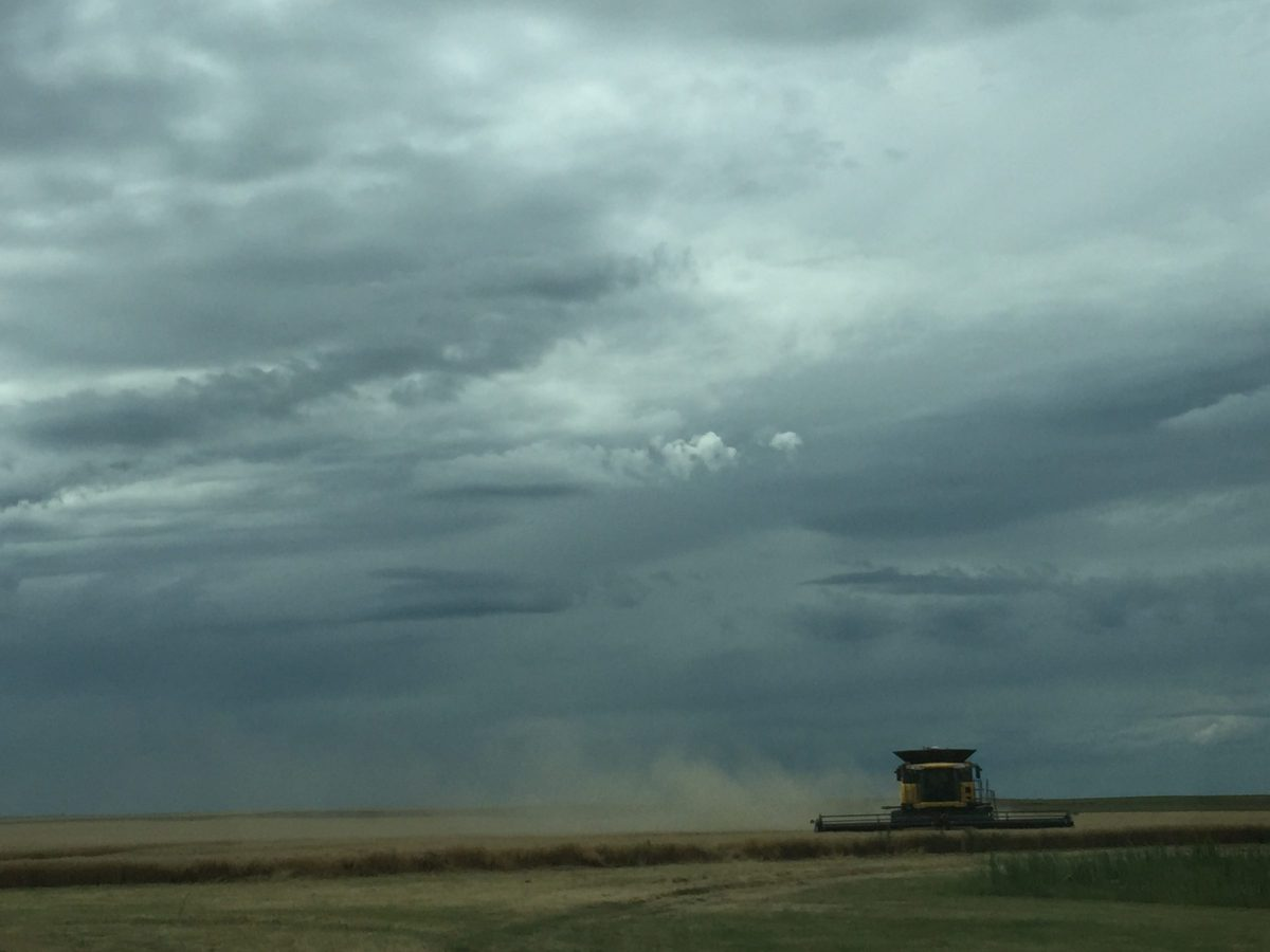 Combine in wheat during harvest with thunderstorm clouds behind.