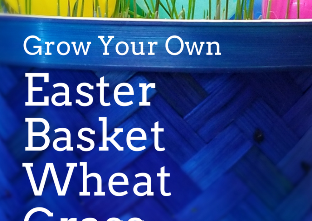 Photo: Grow Your Own Easter Basket filler with wheat grass.
