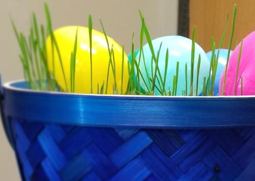 Wheat Grass Easter Basket | EatWheat