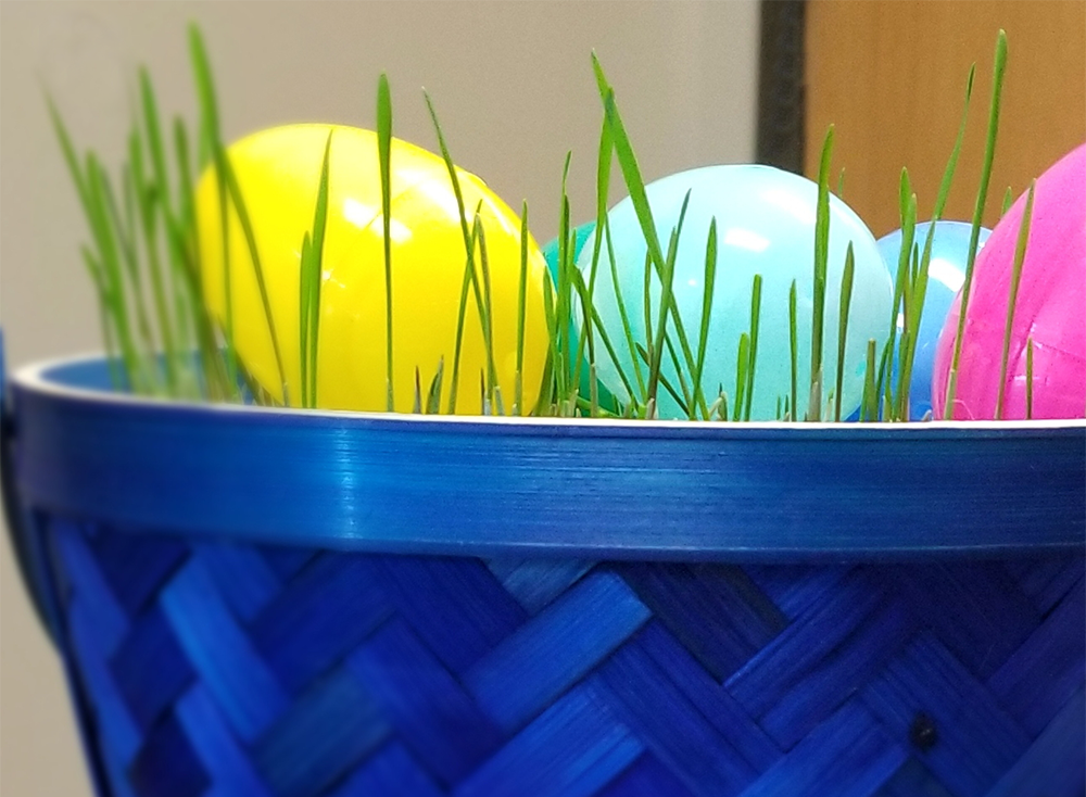 Wheat Grass Easter Basket | EatWheat