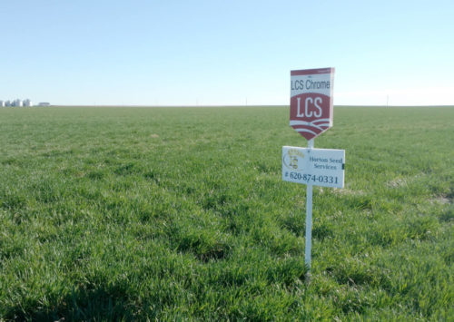 What are the signs next to fields? A variety sign next to a field of wheat.