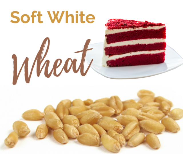 Soft White wheat is one of the six classes of US Wheat.