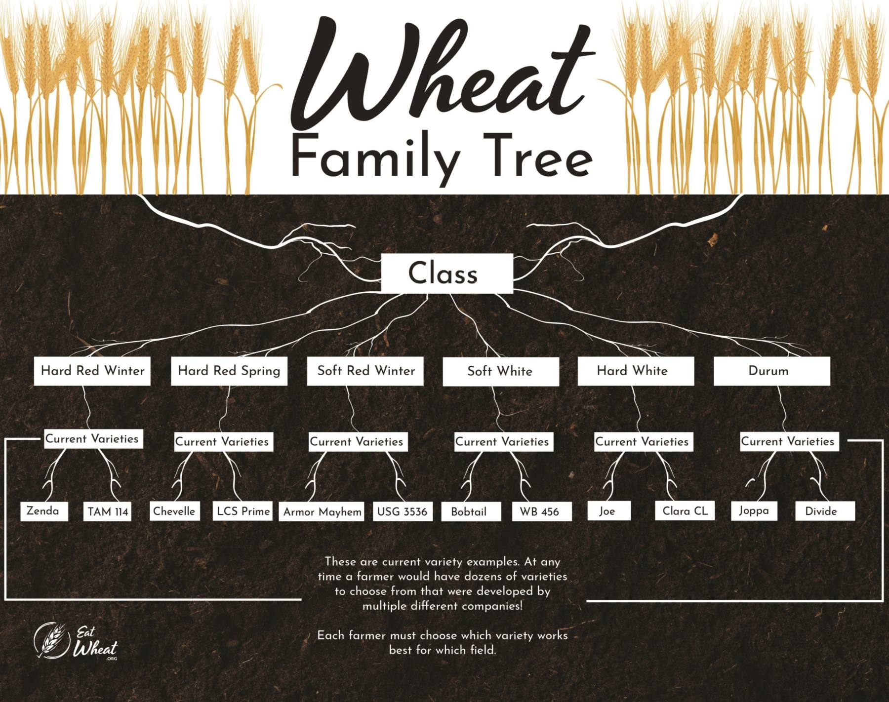 What kinds of wheat are there? And what are those kinds good at making? We have all that information, and more at EatWheat.org!
