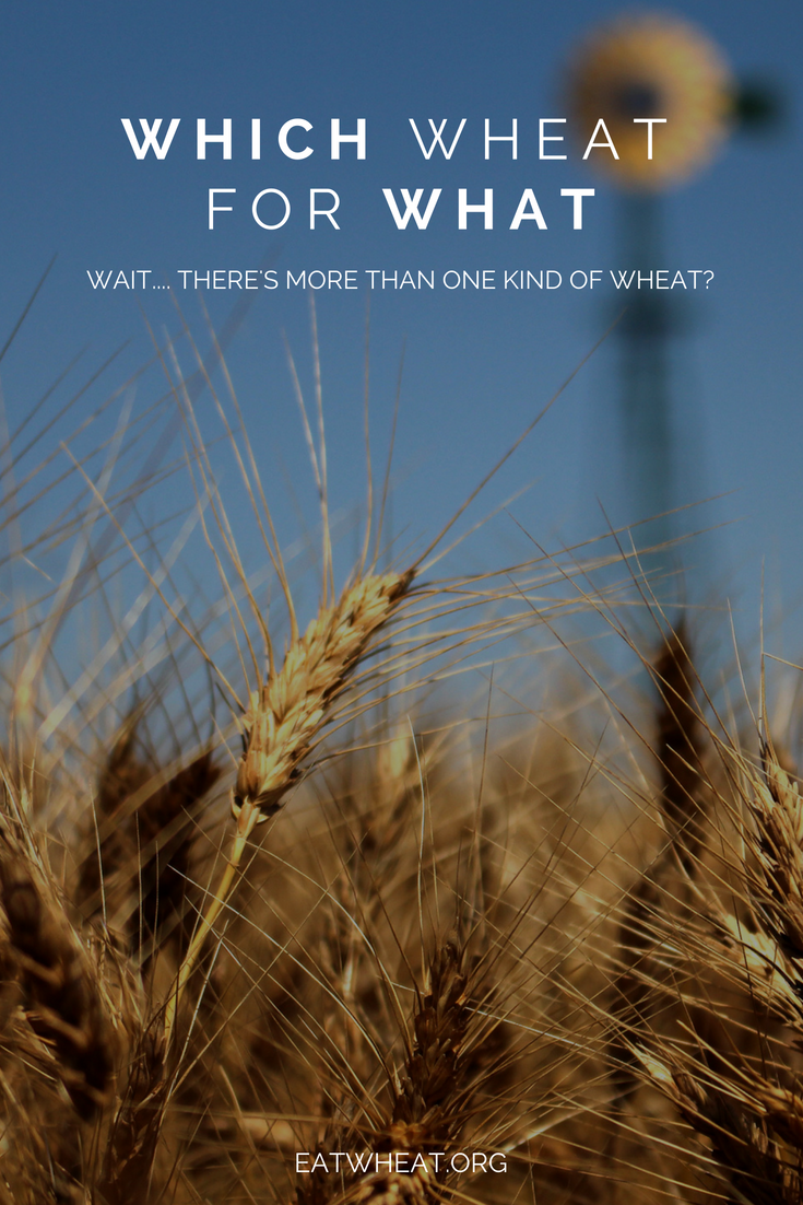 Wait, there's more than one kind of wheat? Take a look at the six classes of wheat and the different foods each class are suited for.