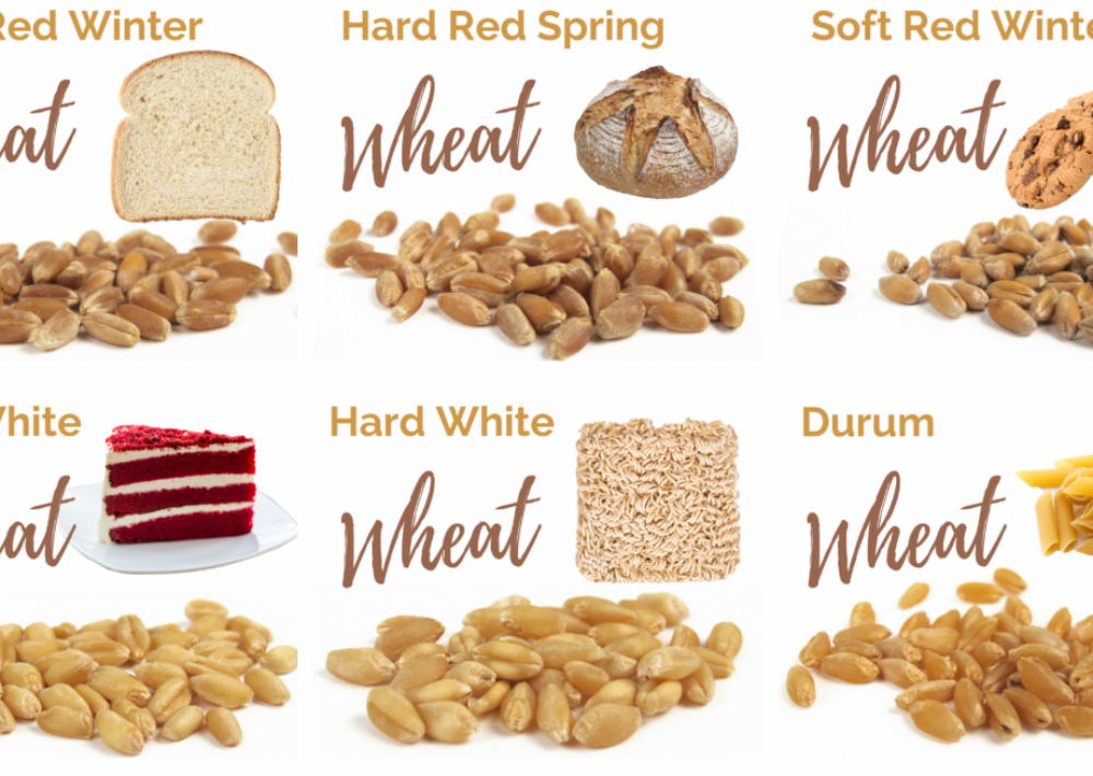 What kinds of wheat are there?