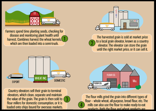 Image: Wheat's Journey from Farm to Table.