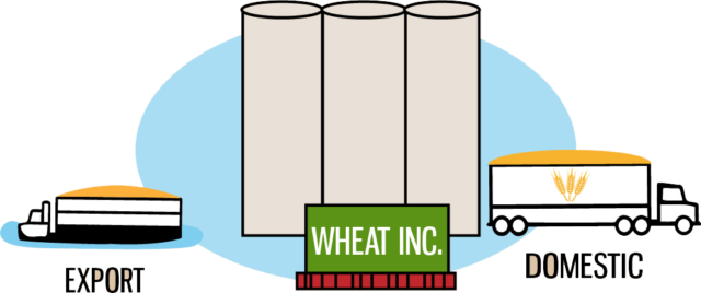 Image: Country elevators sell their grain to terminal elevators, which clean, separate and maintain the value of the grain. The grain is then sold to flour millers for domestic consumption, or it is loaded into ships bound for overseas markets.