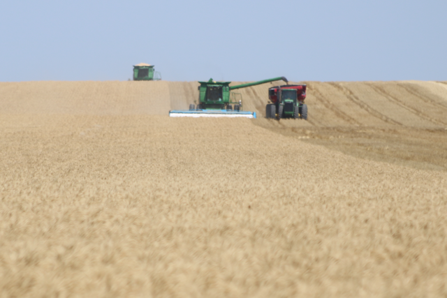 Photo: Combines and grain cart during wheat harvest.