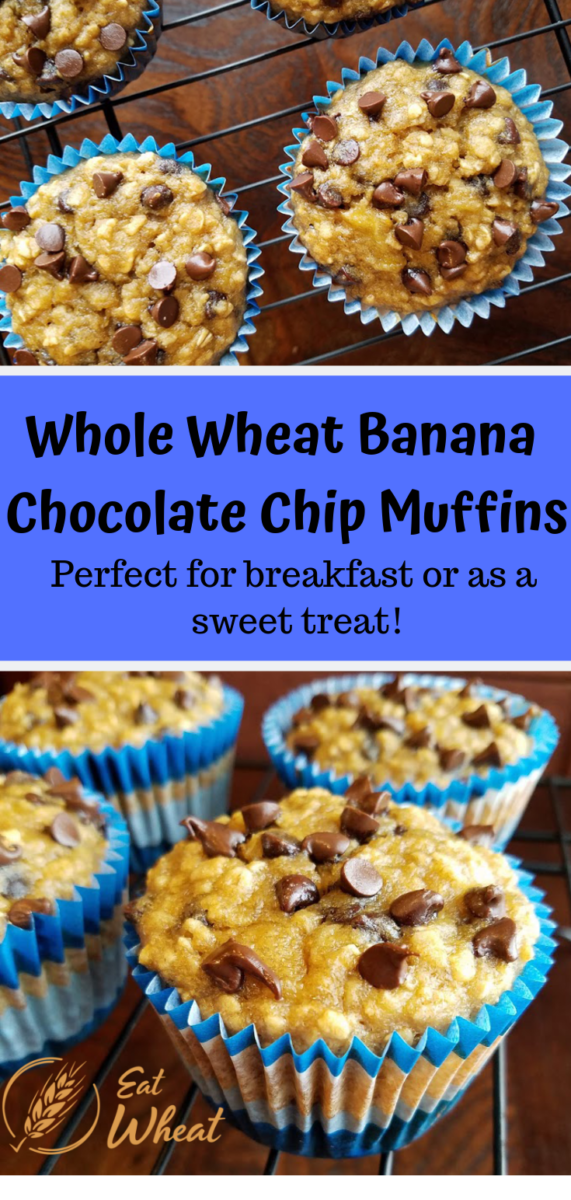 Whole Wheat Banana Chocolate Chip Muffins are made with white whole wheat flour. Enjoy these tender and moist banana muffins for breakfast or as a sweet treat. The mini chocolate chips provide the perfect amount of chocolate in each bite. | eatwheat.org