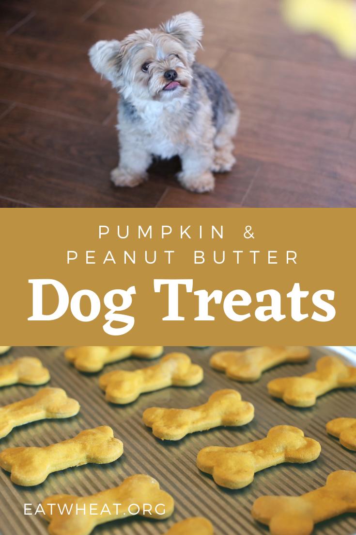 Image: Pumpkin and Peanut Butter Dog Treats.